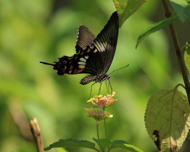 Chitwan 6