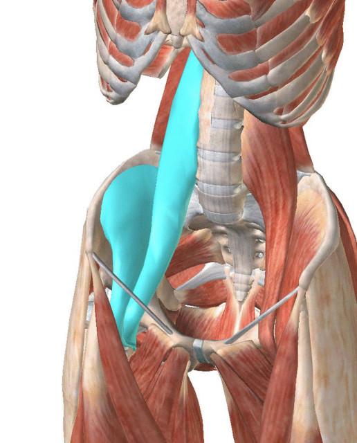 Поясничная мышца: мышца души!