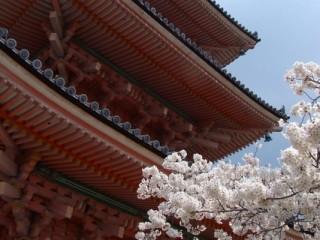 «Созерцание Мимолётного». Йога-путешествие к цветущей сакуре. Япония. 6-22 апреля 2018г.