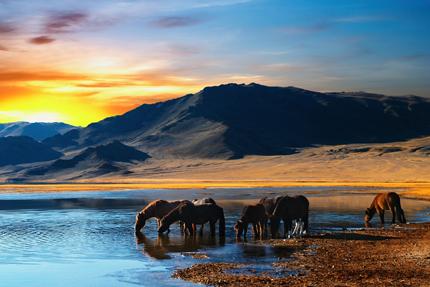 Большое йога-путешествие «Наследие древней Монголии»: сила, мудрость и вдохновение. 27 июля-12 августа 2018г.